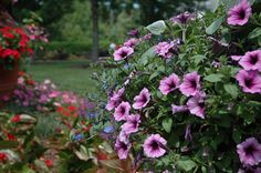 Flowers at the East Portico at Daniel Stowe Botanical Garden, via Flickr