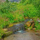 Submitted by  on Reddit. Lost Creek in Paradise Park Mount Hood Oregon [OC] - Nick Gallo [1393x2477]
