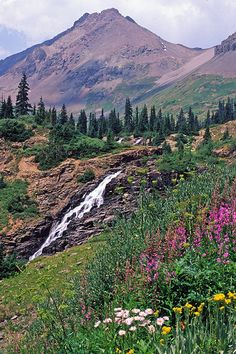 Yankee Boy Basin: Ouray, Colorado - saw the most jaw-dropping display of wildflowers there