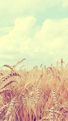 Countryside wheat field. Tap to see Spring & Summer Feel Wallpapers for iPhone. Nature photography iPhone vintage wallpapers. - @mobile9