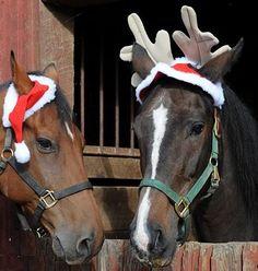 The horses costume