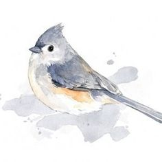 Tufted Titmouse painting #watercolorarts