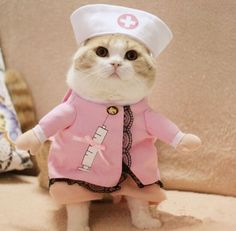Type: Cats Item Type: Costumes Material: Cotton Pattern: Solid Style: Sweet Season: All Seasons Cat Dog Costume, Costume Chat, Nurse Halloween Costume, Nurse Costume, Funny Cats And Dogs, Cats And Kittens, Cute Cats, Funny Costumes, Pet Costumes