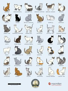 30 ideas for dogs breeds chart pets Dog Breeds Chart, Cat Breeds, Types Of Cats Breeds, Different Breeds Of Cats, Kinds Of Cats, I Love Cats, Crazy Cats, Cool Cats, Funny Cats