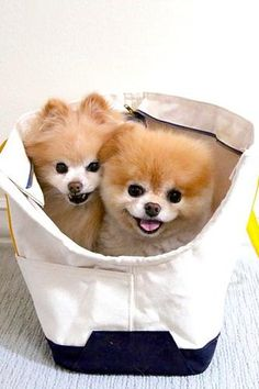 15 of the cutest puppies on Instagram!