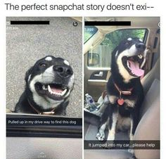 THIS LOOKS EXACTLY LIKE MY DOG AND SHE WOULD DO SOMETHING LIKE THIS | I THINK THIS REALLY IS MY DOG CAUSE SHE HAS THAT DOG TAG AND THAT COLLAR. I DON'T KNOW HOW I FEEL ABOUT THIS