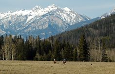 Mount Rainier, Thunder, Ranch, Beast, Mountains, Google, Nature, Travel, Design