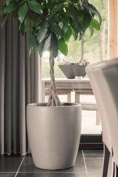 xl bloempot met plant | www.twoonhuis.nl Plant Life, Decor, Money Tree Plant Care, Plants Are Friends, House Plants Decor, Container Plants, Home Decor, Plant Decor, Flower Decorations