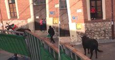 Un toro embiste un carrito de bebé y deja acorralado a un niño en Iriépal (Guadalajara):  #encierros #toro #toros #bull #bullfight #animales #animal #video #videos #viral #bebe #bebes #niño #niños #noticia #noticias #españa #spain #maltratoanimal #guadalajara #schnauzi