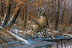 Fall-Whitetail Deer Art Print by Michael Sieve Wildlife Paintings, Wildlife Art, Animal Paintings, Deer Paintings, Original Paintings, Mule Deer Hunting, Hunting Art, Deer Pictures, Deer Pics