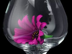 Flower in the glass
