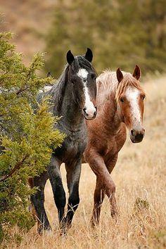 """Wild Mustangs and Badlands"" | North Dakota   from Karen Ochoa"
