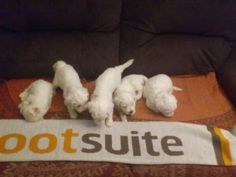 @Lydia Woudenberg: look who loves HootSuite too