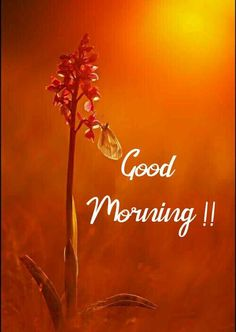 Gud Morning Images, Latest Good Morning Images, Good Morning Beautiful Pictures, Beautiful Morning Messages, Good Morning Image Quotes, Good Morning Images Flowers, Good Morning Cards, Good Morning Picture, Good Morning Greetings