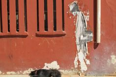 """In Woodstock hat es sich ein Hund auf dem Boden bequem gemacht. Ob er die Kunst an der Wand als sein """"Herrchen"""" akzeptiert?"""