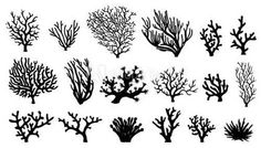 Here you find the best free Ocean Coral Silhouette collection. You can use these free Ocean Coral Silhouette for your websites, documents or presentations. Coral Drawing, Doodle Drawing, Shell Drawing, Coral Pattern, Clip Art, Stencil Patterns, Illustration, Silhouette Vector, Ocean Life