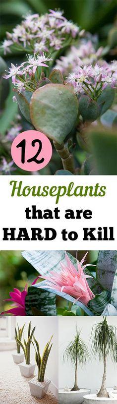 12 Houseplants that are HARD to Kill. Gardening, home garden, garden hacks, garden tips and tricks, growing plants, plants, vegetable gardening, planting fruit, flower garden, outdoor living