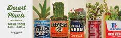 みなとみらい店Desert Plants POP UP STORE