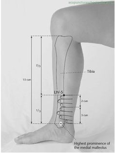 LIV-5 Woodworm Canal LIGOU - Acupuncture Points -1