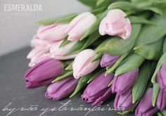 Tulips in lilac.