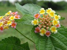 Nature, Flowers, Plants, Naturaleza, Plant, Nature Illustration, Royal Icing Flowers, Off Grid, Flower