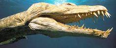 Resultado de imagen para nothosaurus