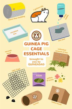 Did you just adopt a guinea pig and are wondering what necessities they need to live a comfortable life? Well, we prepared a list of some things that will make your life and your guinea pig's life better! Diy Guinea Pig Cage, Guinea Pig Food, Guinea Pig House, Baby Guinea Pigs, Guinea Pig Care, Pet Pigs, Baby Pigs, Guinie Pig, Guinea Pig Information