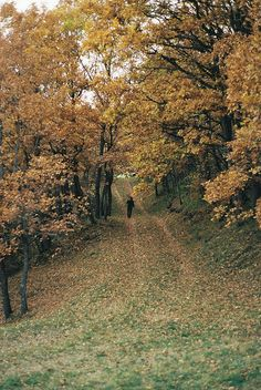 take a walk after eating in the beautiful autumn landscape/