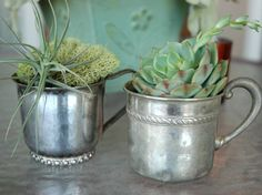 succulents in silver cups