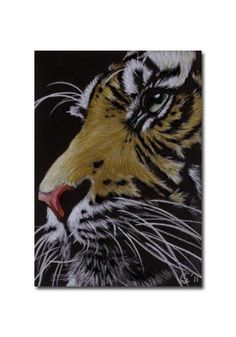TIGER 38 portrait big cat feline pencil painting Sandrine Curtiss Art Limited Edition Print ACEO by Sandrinesgallery