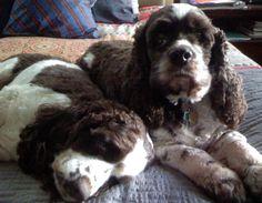 Louie & Bennie...Father/Son moment