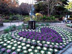 Diy Garden Decor, Garden Art, Garden Design, Home Landscaping, Front Yard Landscaping, Beautiful Gardens, Beautiful Flowers, Cabbage Flowers, Ornamental Cabbage