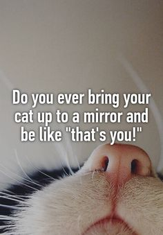 """Do you ever bring your cat up to a mirror and be like """"that's you!"""""""