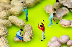 Peanut workers, little people on food, creative photography, miniature art, home decor, wall art, food art, surrealism, gift choice. By Paul Ge