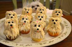 maltipoo pupcakes