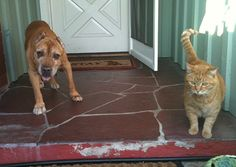 StubbyDog: Stories - Lionel, a senior pit bull, and his pal, Hercules, the cat