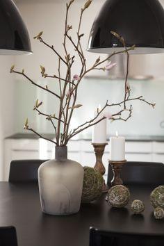 Magnolia greiner og mosekuler