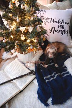 "the-book-ferret:   ""Mistletoe,"" said Luna... | I cannot live without books ----------"