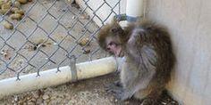 PPI Florida Monkey Farm Should Be Shut Down Immediately