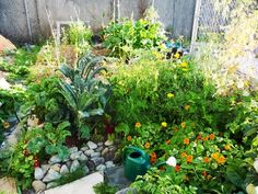 Permaculture - Create mini-ecosystems in your garden