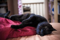 Life is hard :) by raphael.chekroun, via Flickr