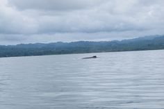 It was taken by a traveler during our #Whale Watching #Tour  #nature #wildlife #costarica  http://www.nicuesalodge.com/