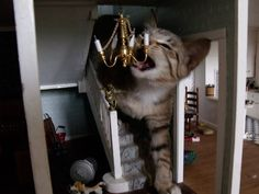 Funny, this actually did happen to my house with my cat. Damn cat broke the chandalier in my dollhouse foyer....Aaargh, cats!