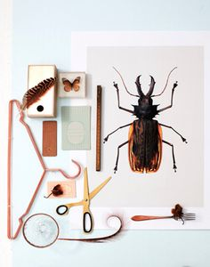 HAY scissors brass - HAY hangers copper - Poster Beetle B1 Photography Stylecookie