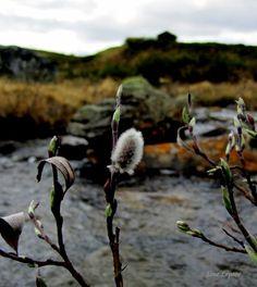 Einundalen, Østerdalen, Norway. TONE LEPSOES PICTURES.