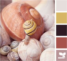 Snail Tones by Design Seeds