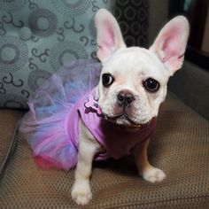 Mailey is daddy's little ballerina!