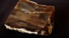 Petrified Wood Agate Natural Rough 350 Gr