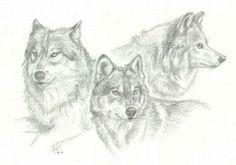 dessin loups