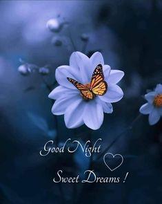 Good Night Love Messages, Good Night Hindi Quotes, Good Night Greetings, Good Day Quotes, Morning Quotes, Good Morning Messages, Night Quotes, Good Night For Him, Good Night Gif